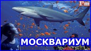 МОСКВАРИУМ. Красочный подводный мир. Акулы, стерляди, золотые рыбки, белуга и прочие.