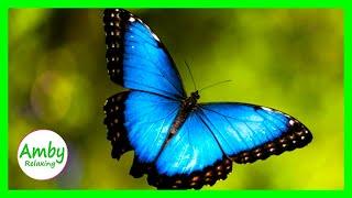 Stunning Butterflies & The Best Relaxing Music -  Meditation Relaxing Music - 2 Hours - HD 1080P