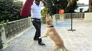 preview picture of video 'Dog Training, Maharashtra, INDIA'