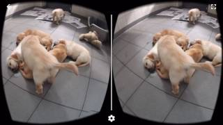 VR Dog Sim 360 Google Cardboard Virtual Reality 3D Gameplay 1080p