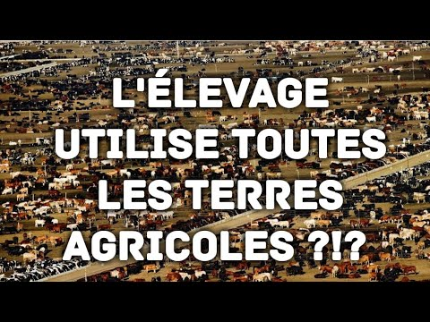 L'élevage utilise-t-il trop de terres agricoles ?