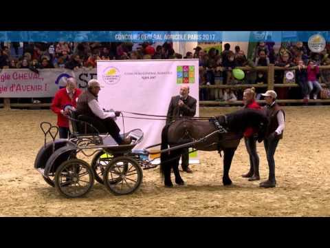 Voir la vidéo : Carrière Équine du 05 mars 2017, partie 3
