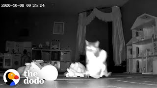 Hidden Camera Catches Cat Bringing Gifts To Her Family | The Dodo Cat Crazy by The Dodo