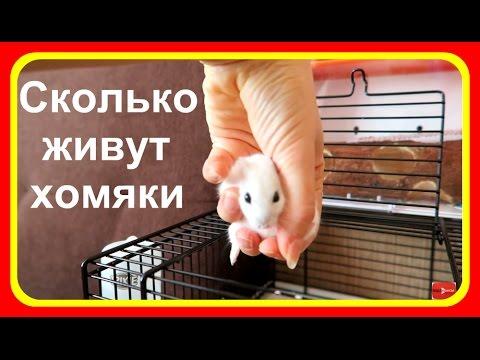 Первый прогон глистов у щенков