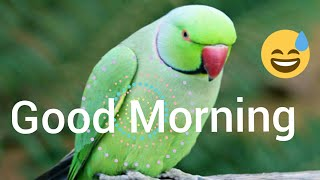Good morning video - Whatsapp status,greetings, wishes,quotes,gif | parrot good morning,birds status