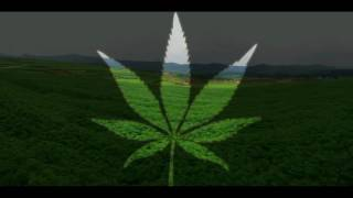 Den Gröna Sidan - Cannabis och andra farliga droger