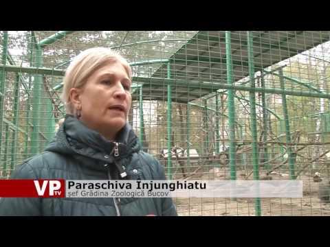 Încă un suflet la Zoo Bucov