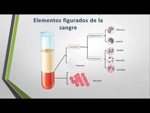 Productos para la diabetes tipo