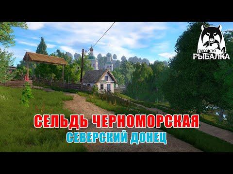 Сельдь черноморская на р. Северский Донец