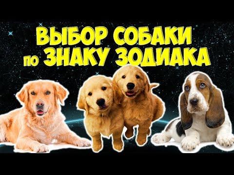 Самый удачный выбор собаки по Знаку Зодиака 🐶🐾
