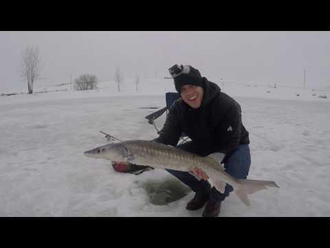 Isfiskeri efter stør afsnit 1