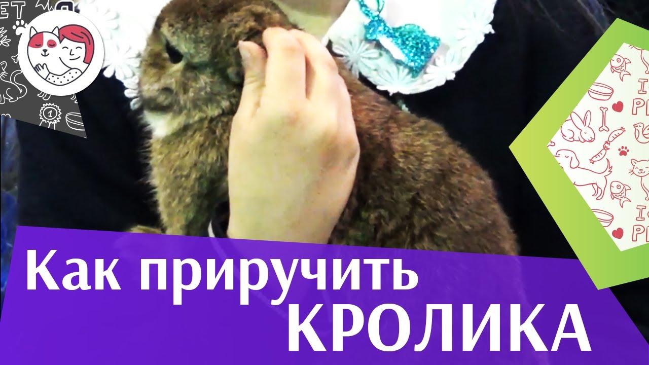 Как приручить кролика: советы на ilikepet