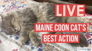 Cat Sleeping 😴 And Grooming |cats pets and animals