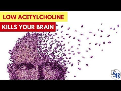 🧠 WARNING: Low Acetylcholine = Bad Memory, Alzheimer's, Parkinson's