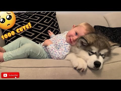Adorable Baby Cuddles Her Malamute Puppy! (CUTEST VIDEO EVER!!)