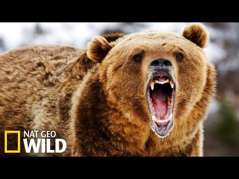 La pêche en rivière, grand sport national pour les ours !