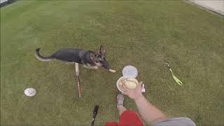 How a Baseball Player Exercises a German Shepard Dog (Fun)