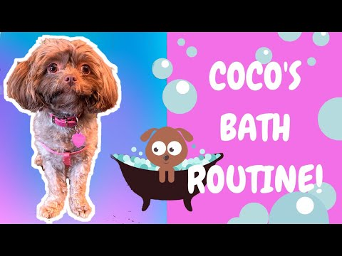 Coco's Bath Routine! Basic Dog Grooming