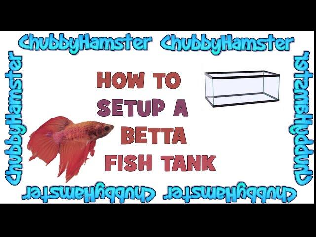 How to setup a betta fish tank