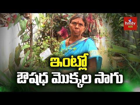 Medicinal Plants || Organic Terrace Garden || Shanmuka || Contact - 9505413131