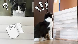 Cat vs Wall of Toilet Paper. New Challenge!!!
