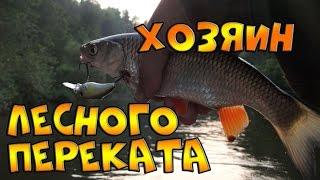 Рыбалка что клюет на лесном перекате