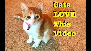 Video For YOUR CAT to Watch !  Entertainment for cats ! Cat TV !