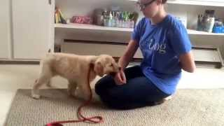 Emma's Daily Minutes - How To Stop Puppy Biting!