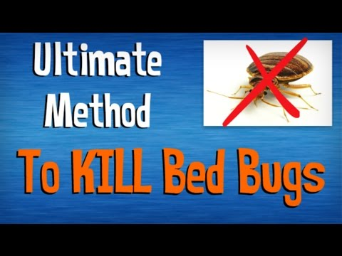 Video How to Kill Bed Bugs FAST | Best Advice on Killing Bed Bugs Yourself | Natural Pest Control Tips