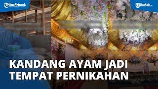 Viral Video Kandang Ayam yang Disulap Jadi Tempat Pesta Pernikahan yang Mewah, Banyak Netizen Kagum