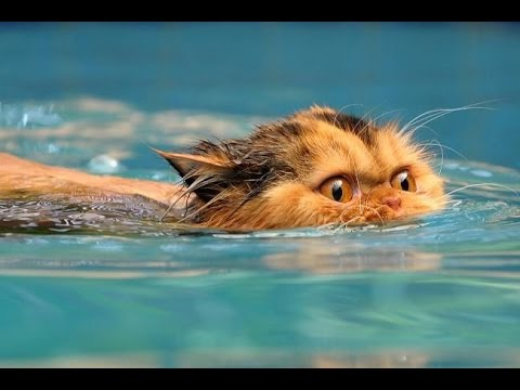 Funny Cats ECards Water Cats funny cats video