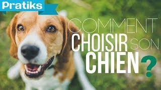 Comment choisir son chien