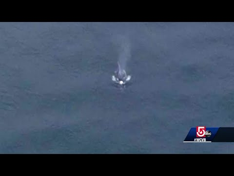 Humpback whale spotted swimming through Cape Cod Canal