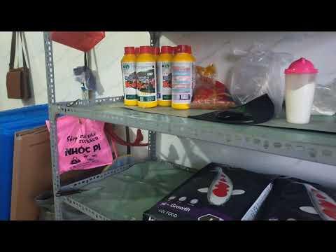Cửa hàng cá Koi
