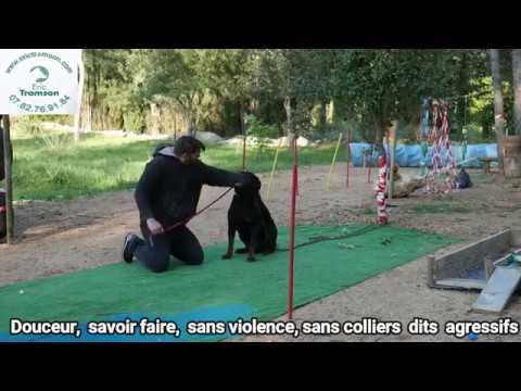 ROTTWEILER TUE LE CHAT ET LE CHIEN DE LA FAMILLE/URGENCE ERIC TRAMSON/EDUCATEUR CANIN