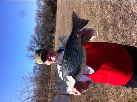 Big Bass and Hybrid Stripers in a Pond!