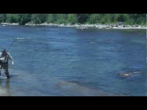 Whanganui River Trout