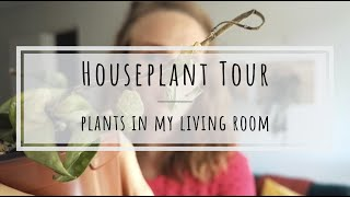Houseplant tour: plants in my living room!