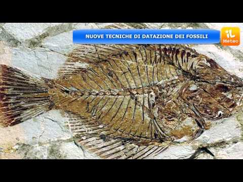 datazione radioattiva per fossili