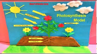 Photosynthesis Model Project | School Science Exhibition For Students/kids