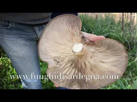 Se il permanganato di potassio da un fungo di piede aiuta