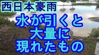 西日本豪雨増水から水が引くと大量に現れたもの