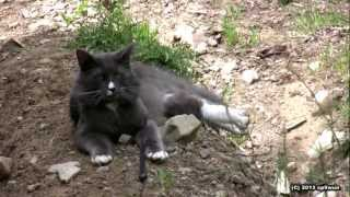 preview picture of video 'Benek The Cat on a trail / Benek na szlaku'