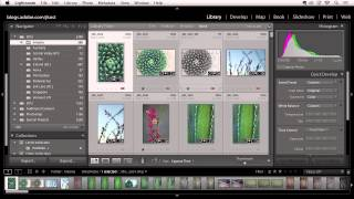 Lightroom 5: Creating Custom Collections of Images