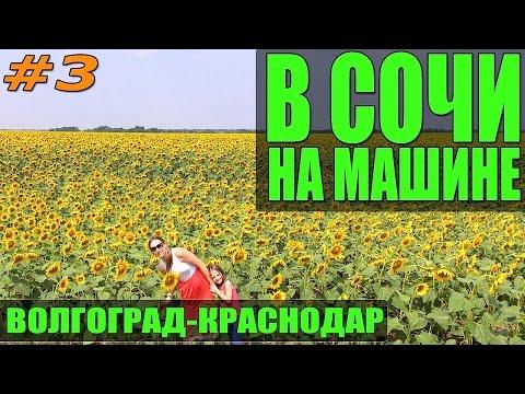 Alezan per lacquisto congiunto Sevastopol
