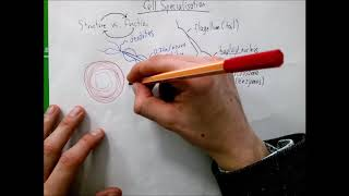 Cell Specialisation