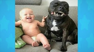 FUNNY DOG LOVES TO MAKE BABY LAUGH ! Dog loves Baby Compilation