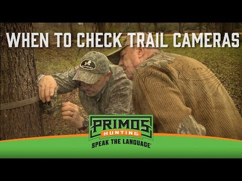 When to Check Trail Cameras video thumbnail