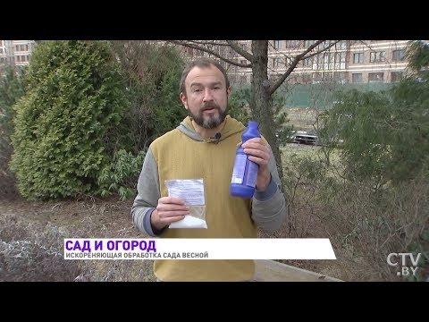 Обработка сада весной! Самая эффективная защита от болезней и вредителей от Ивана Русских