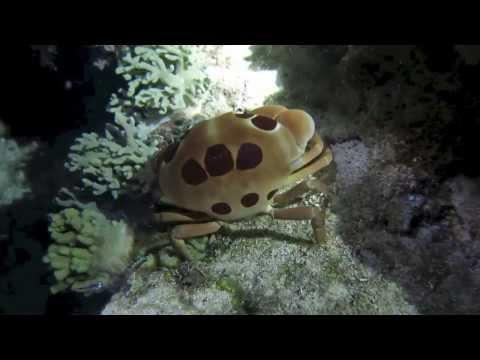 Die schöne Unterwasserlandschaft, Coco White Beach,Philippinen